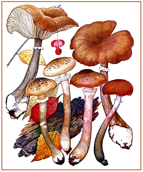 Показать грибы