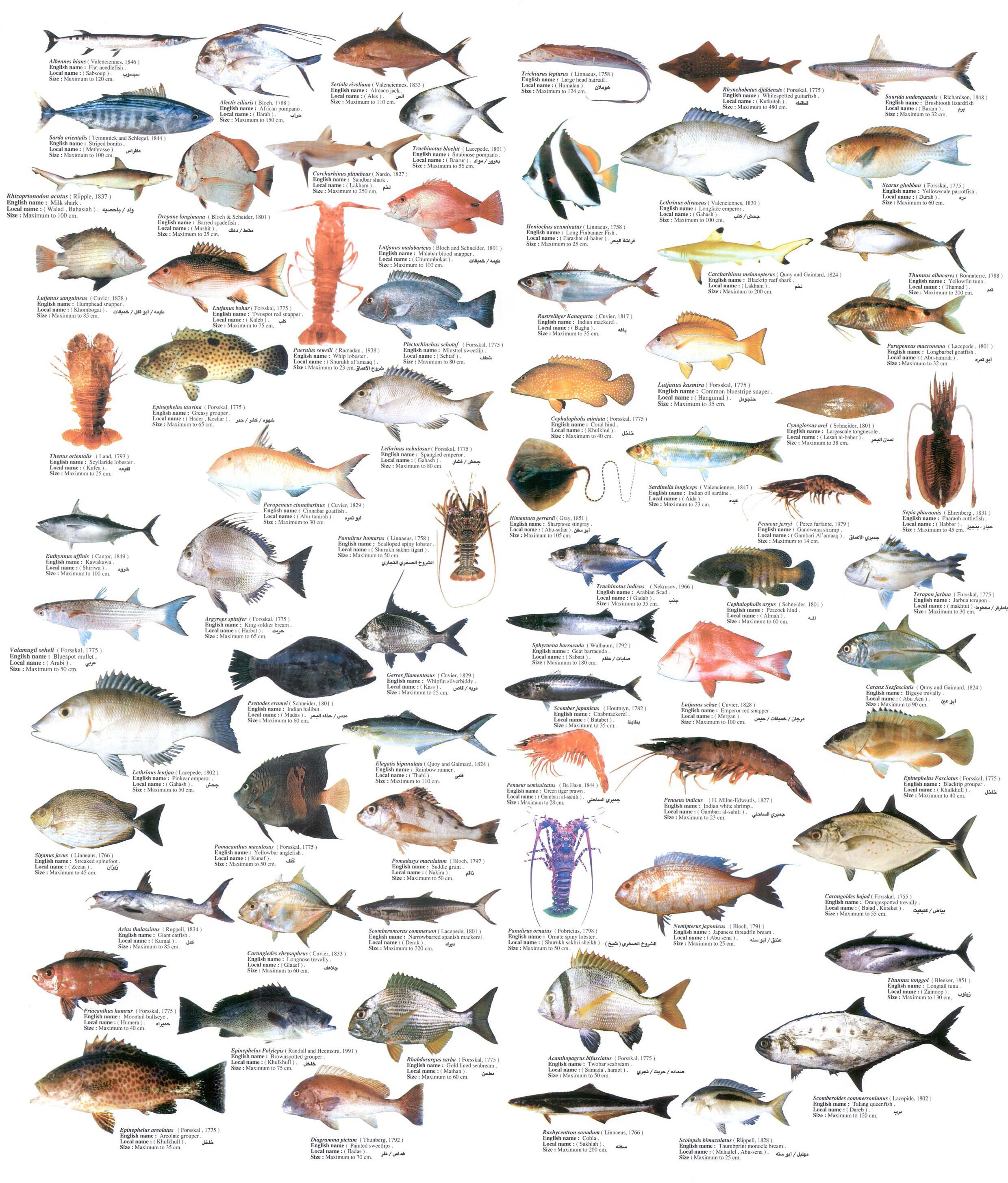 съедобные морские рыбы картинки планете осталось так